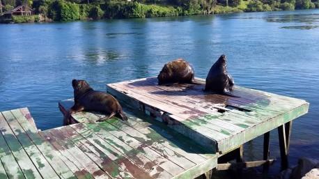 Les fameux loups de mer