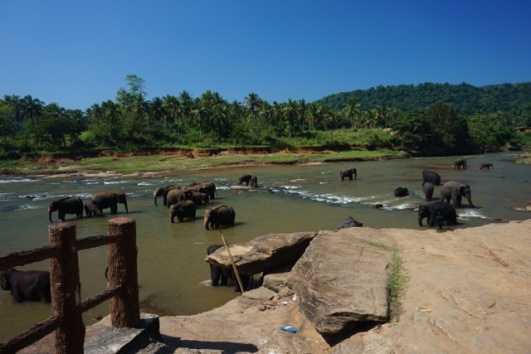 Un peu plus loin, le Sri Lanka
