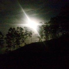 Ma première rando de nuit dans les plantations de thé